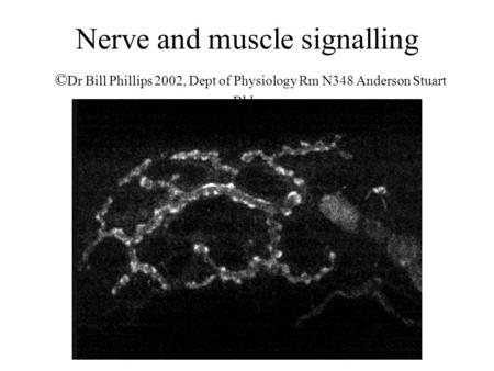 Nerve and muscle signalling © Dr Bill Phillips 2002, Dept of Physiology Rm N348 Anderson Stuart Bldg.