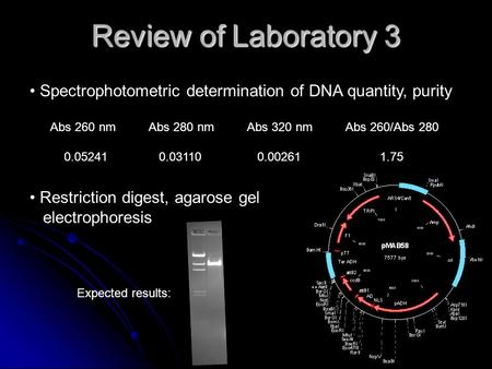 Review of Laboratory 3 Spectrophotometric determination of DNA quantity, purity Abs 260 nmAbs 280 nmAbs 320 nmAbs 260/Abs 280 0.05241 0.03110 0.00261 1.75.