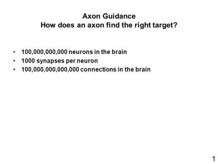 Axon Guidance How does an axon find the right target?