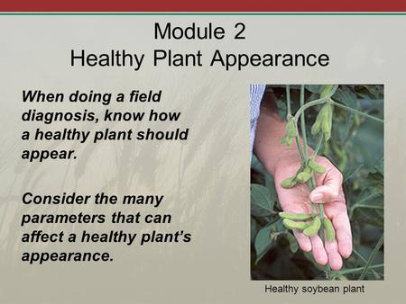 Module 2 Healthy Plant Appearance When doing a field diagnosis, know how a healthy plant should appear. Consider the many parameters that can affect a.