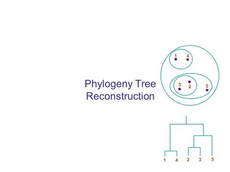 Phylogeny Tree Reconstruction 1 4 3 2 5 1 4 2 3 5.