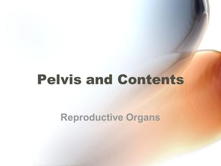 Pelvis and Contents Reproductive Organs.