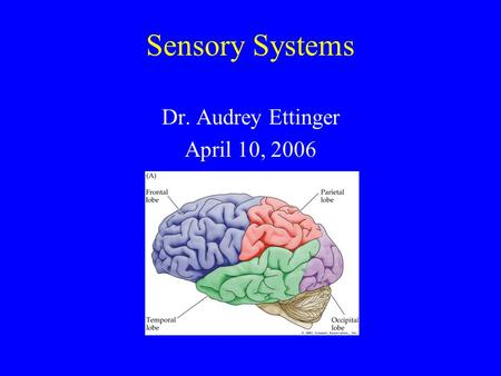 Sensory Systems Dr. Audrey Ettinger April 10, 2006.