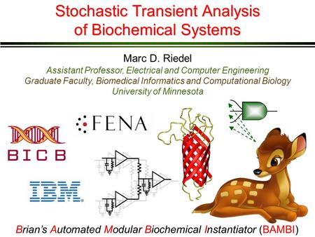 Stochastic Transient Analysis of Biochemical Systems Marc D. Riedel Assistant Professor, Electrical and Computer Engineering Graduate Faculty, Biomedical.