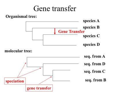 Gene transfer Organismal tree: species B species A species C species D Gene Transfer seq. from B seq. from A seq. from C seq. from D molecular tree: speciation.