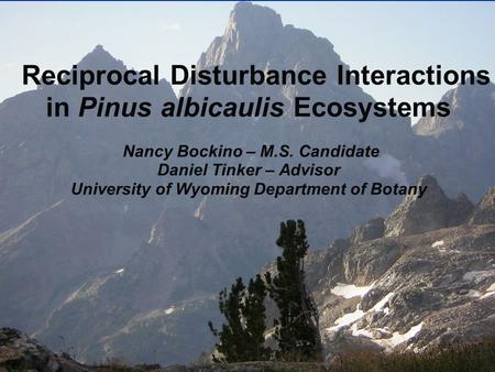Reciprocal Disturbance Interactions in Pinus albicaulis Ecosystems Nancy Bockino – M.S. Candidate Daniel Tinker – Advisor University of Wyoming Department.