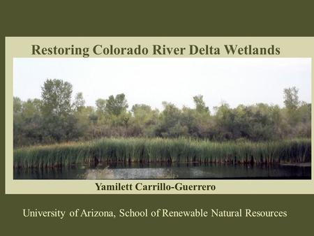 Restoring Colorado River Delta Wetlands