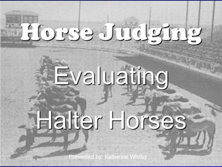 Horse Judging Evaluating Halter Horses Presented by: Katherine Whitby.