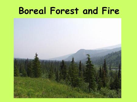 Boreal Forest and Fire. sq. mi.sq. km. Boreal Forests 6.416.6 Other Forests 12.833.2.
