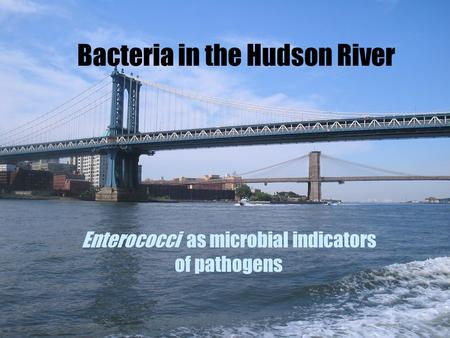 Bacteria in the Hudson River Enterococci as microbial indicators of pathogens.