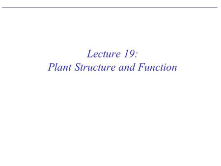 Lecture 19: Plant Structure and Function