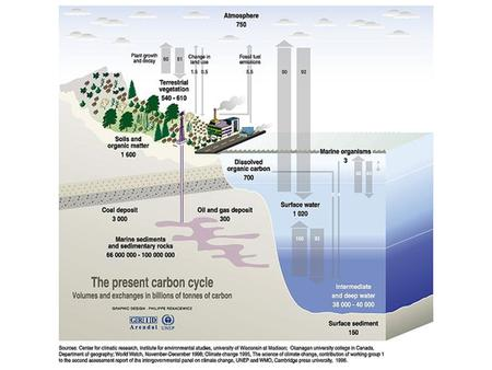 Oceanic Carbon Cycle Upwelling brings nutrients (e.g. PO 4 ) to euphotic zone Photosynthesis (Dissolved Inorg  Particulate Organic Matter) Recycling.