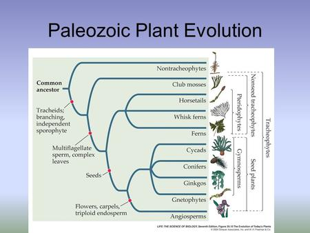 Paleozoic Plant Evolution. First Forays: Intertidal Marine Algae.