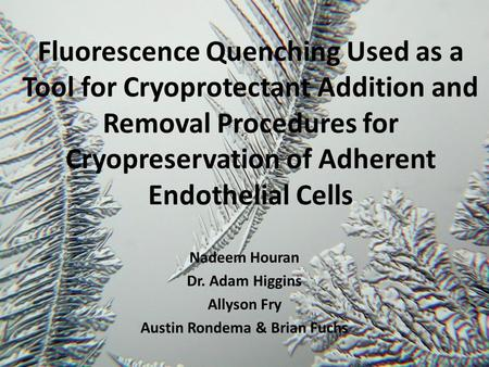 Fluorescence Quenching Used as a Tool for Cryoprotectant Addition and Removal Procedures for Cryopreservation of Adherent Endothelial Cells Nadeem Houran.