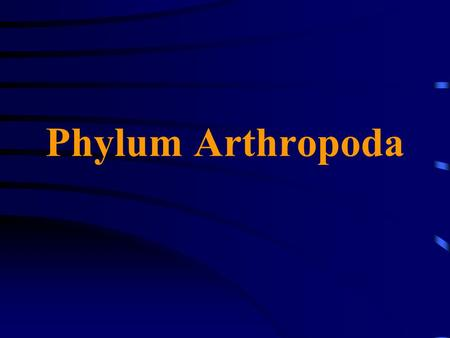 Phylum Arthropoda. Similarities between Annelids and Arthropods Arthropods are metameric and their segments have appendages Nervous system with ventral.
