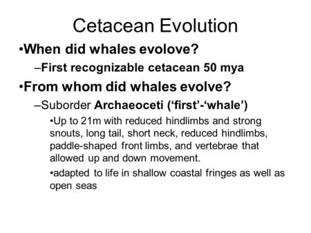 Cetacean Evolution When did whales evolove? –First recognizable cetacean 50 mya From whom did whales evolve? –Suborder Archaeoceti ('first'-'whale') Up.