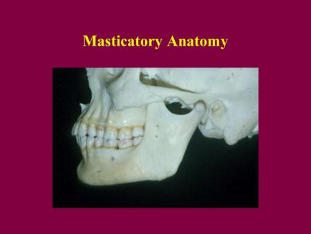Masticatory Anatomy.