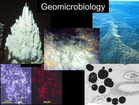 Geomicrobiology. Course Goals At the end of this course you will be able to… –Intelligently converse with microbiologists, geologists, environmental scientists.