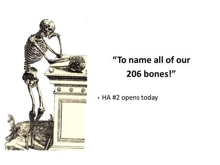 """To name all of our 206 bones!"""