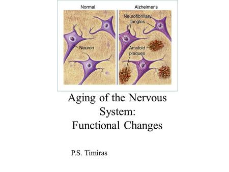 Aging of the Nervous System: Functional Changes P.S. Timiras.