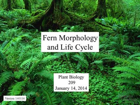 Fern Morphology and Life Cycle Plant Biology 209 January 14, 2014 Version 140116.