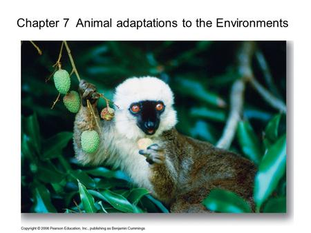 1 Chapter 7 Animal adaptations to the Environments.