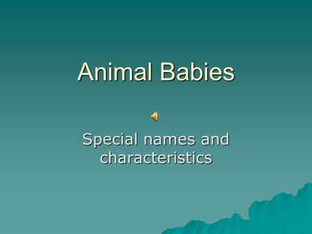 Animal Babies Special names and characteristics Rabbit babies.