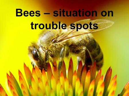 Belgrade, July 2 nd 2008, Dr. T. Schneider, BCS – D – GRA/Insecticides, Bees – situation on trouble spots.