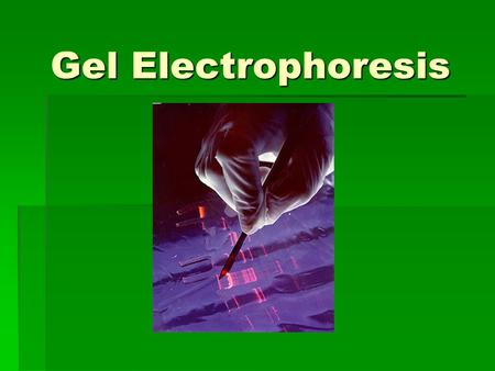 Gel Electrophoresis. Electrophoresis: DNA Separation  Standard tool in biochemistry labs  Uses  Diagnose disease  Identify genes and gene structures.