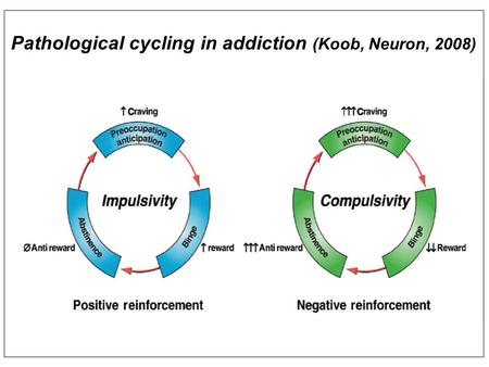 Pathological cycling in addiction (Koob, Neuron, 2008)