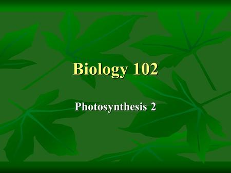 Biology 102 Photosynthesis 2. Lecture Outline 1.The light-independent reactions 2.Summary of photosynthesis 3.Water, carbon dioxide and the C4 pathway.