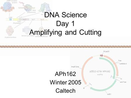 DNA Science Day 1 Amplifying and Cutting APh162 Winter 2005 Caltech.