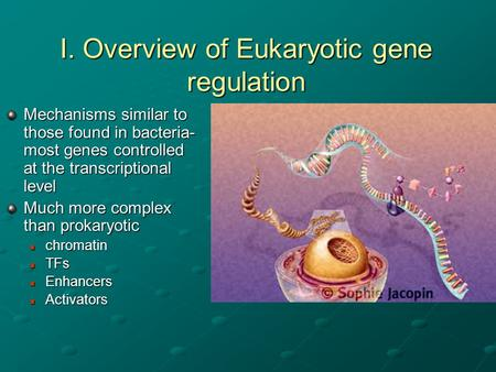 I. Overview of Eukaryotic gene regulation Mechanisms similar to those found in bacteria- most genes controlled at the transcriptional level Much more complex.