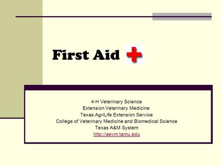 First Aid 4-H Veterinary Science Extension Veterinary Medicine Texas AgriLife Extension Service College of Veterinary Medicine and Biomedical Science Texas.