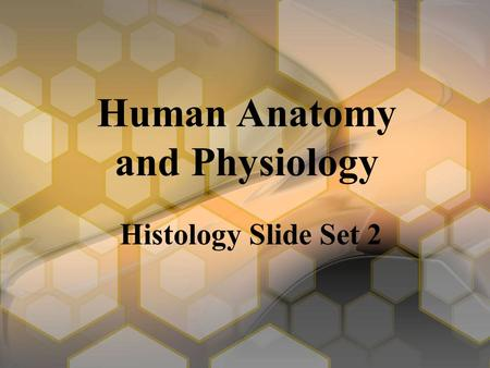 Human Anatomy and Physiology Histology Slide Set 2.