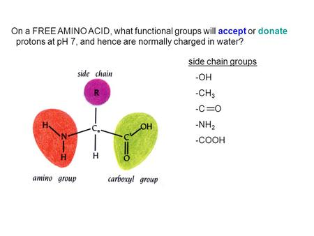 On a FREE AMINO ACID, what functional groups will accept or donate protons at pH 7, and hence are normally charged in water? side chain groups -OH -CH.