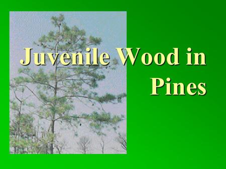 Juvenile Wood in Pines. Overview Basics Of Wood Production What Is Juvenile Wood Characteristics What influences Juvenile Wood What Are The Problems With.