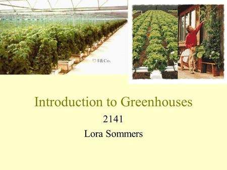 Introduction to Greenhouses 2141 Lora Sommers. I. History of Greenhouses A. Began in Holland in the 1600's B. Why? Because the Netherlands were the center.