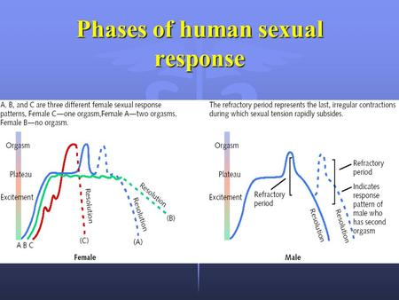 Phases of human sexual response