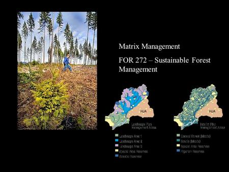 Matrix Management FOR 272 – Sustainable Forest Management.