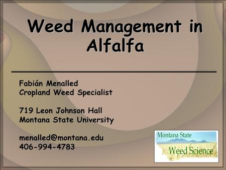 Weed Management in Alfalfa Fabián Menalled Cropland Weed Specialist 719 Leon Johnson Hall Montana State University 406-994-4783.