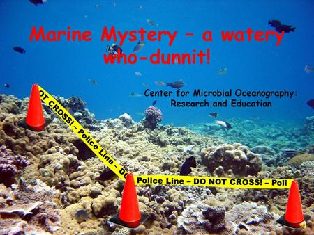 Marine Mystery – a watery who-dunnit! Center for Microbial Oceanography: Research and Education OT CROSS! – Police Line – DO Police Line – DO NOT CROSS!