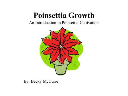 Poinsettia Growth An Introduction to Poinsettia Cultivation By: Becky McGuire.