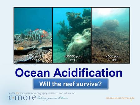 1 Ocean Acidification Will the reef survive?