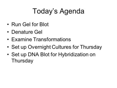 Today's Agenda Run Gel for Blot Denature Gel Examine Transformations Set up Overnight Cultures for Thursday Set up DNA Blot for Hybridization on Thursday.