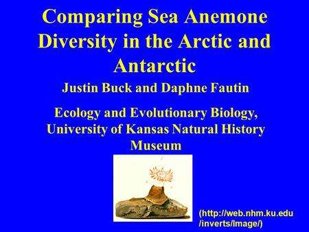 Comparing Sea Anemone Diversity in the Arctic and Antarctic Justin Buck and Daphne Fautin Ecology and Evolutionary Biology, University of Kansas Natural.