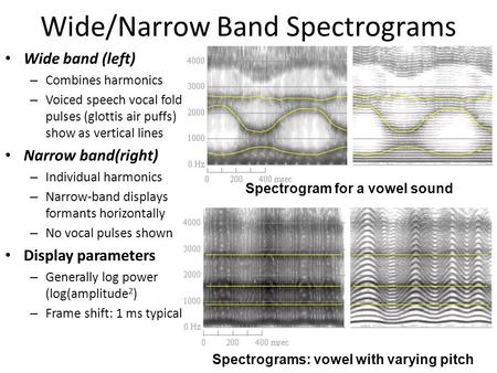Wide/Narrow Band Spectrograms Wide band (left) – Combines harmonics – Voiced speech vocal fold pulses (glottis air puffs) show as vertical lines Narrow.