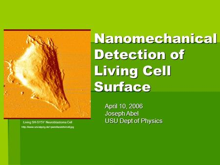 Nanomechanical Detection of Living Cell Surface April 10, 2006 Joseph Abel USU Dept of Physics Living SH-SY5Y Neuroblastoma Cell