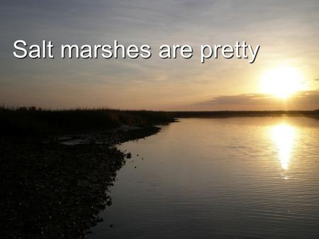 Salt marshes are pretty.  Salt marshes occur where the land meets the sea, usually behind an estuary or sound and only on the coasts  Estuary-where.