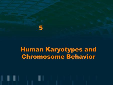 Human Karyotypes and Chromosome Behavior